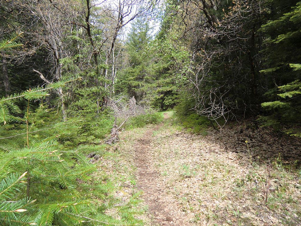 Badger Creek Trail #479