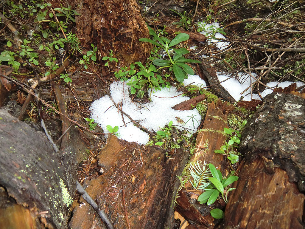 Hail from the Previous Night