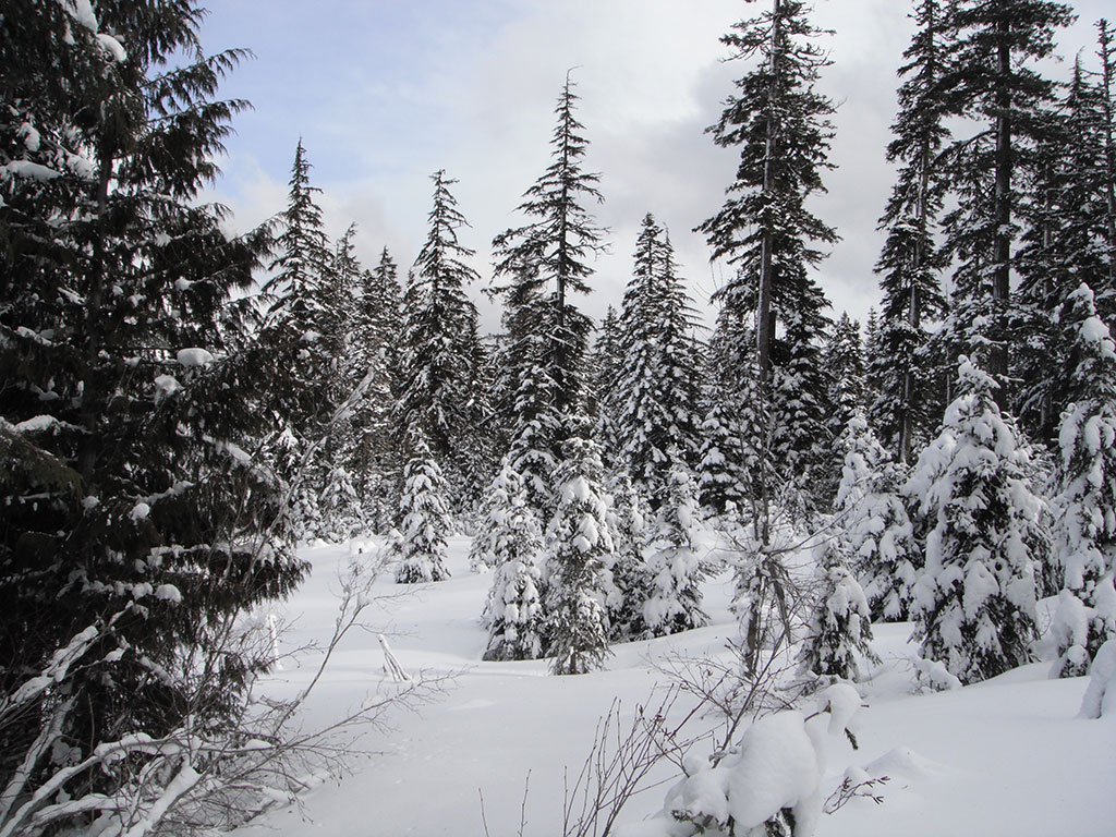 Snow Landscape Along the Trail