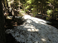 Snow on Catalpa Lake Trail #535