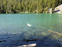 Bella Enjoying a Swim in Catalpa Lake