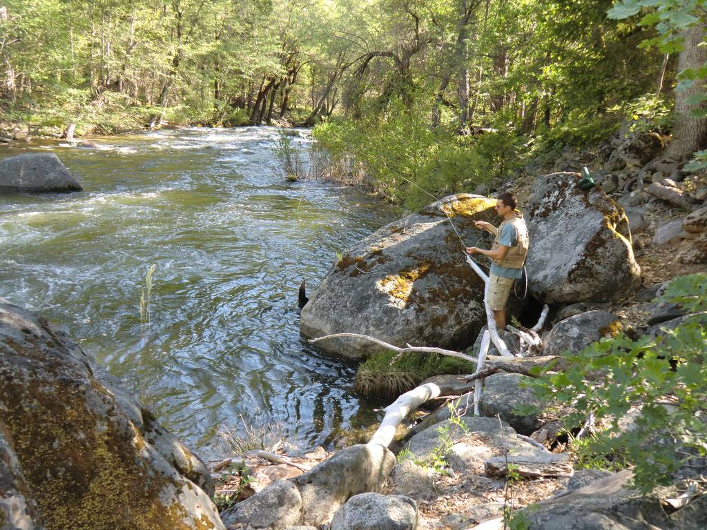 Fly fishing the south fork tuolumne river near yosemite np for Fishing in yosemite