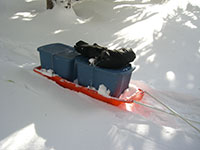 Paris Expedition Pulk Sled