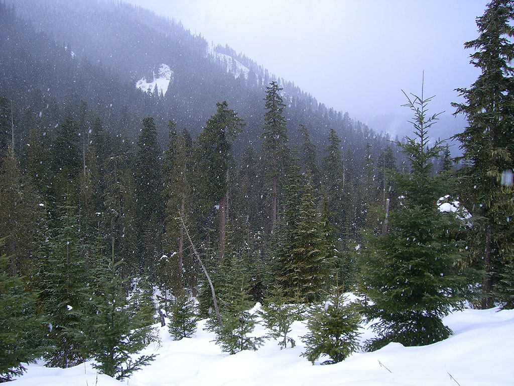 Snowing in the Mountains of Upper Clackams Oregon