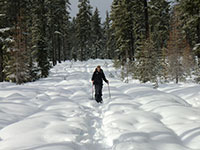 Jason Snowshoeing to Clear Lake Lookout