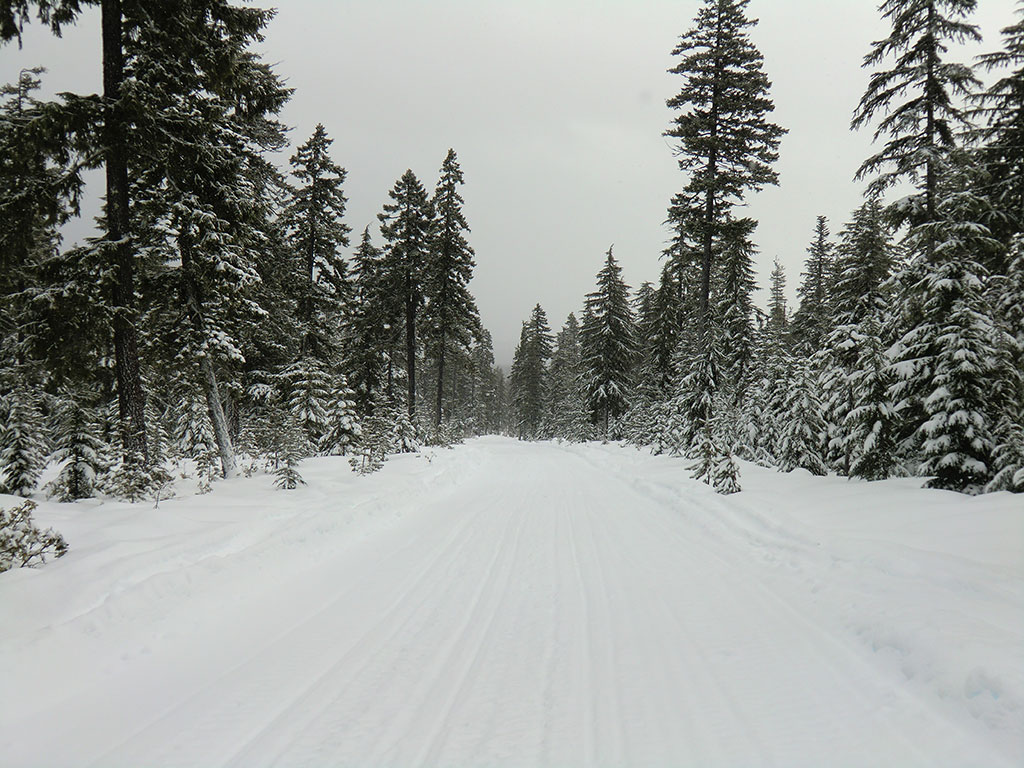 Groomed Trail Back to Skyline SnoPark
