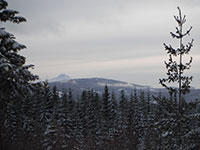 Mt Jefferson from Forest Road 4891