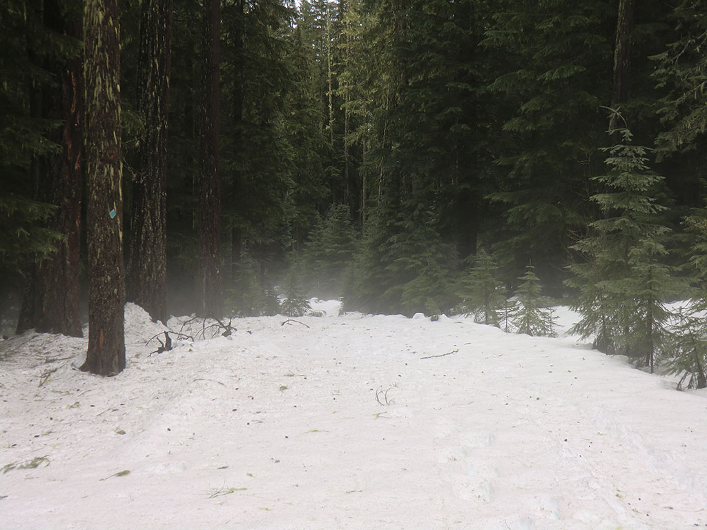 Fog Over Trail to Fish Lake Remount Depot