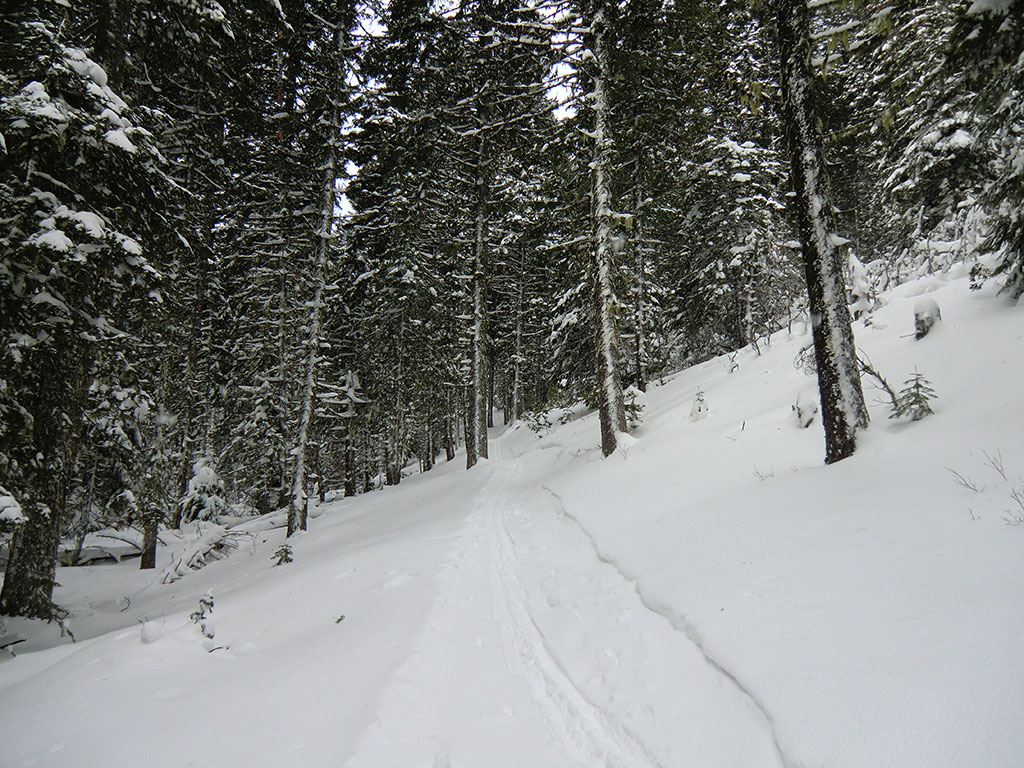Snow Covered Tilly Jane Trail
