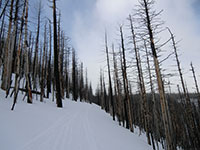Steep Traverse Along Tilly Jane Trail