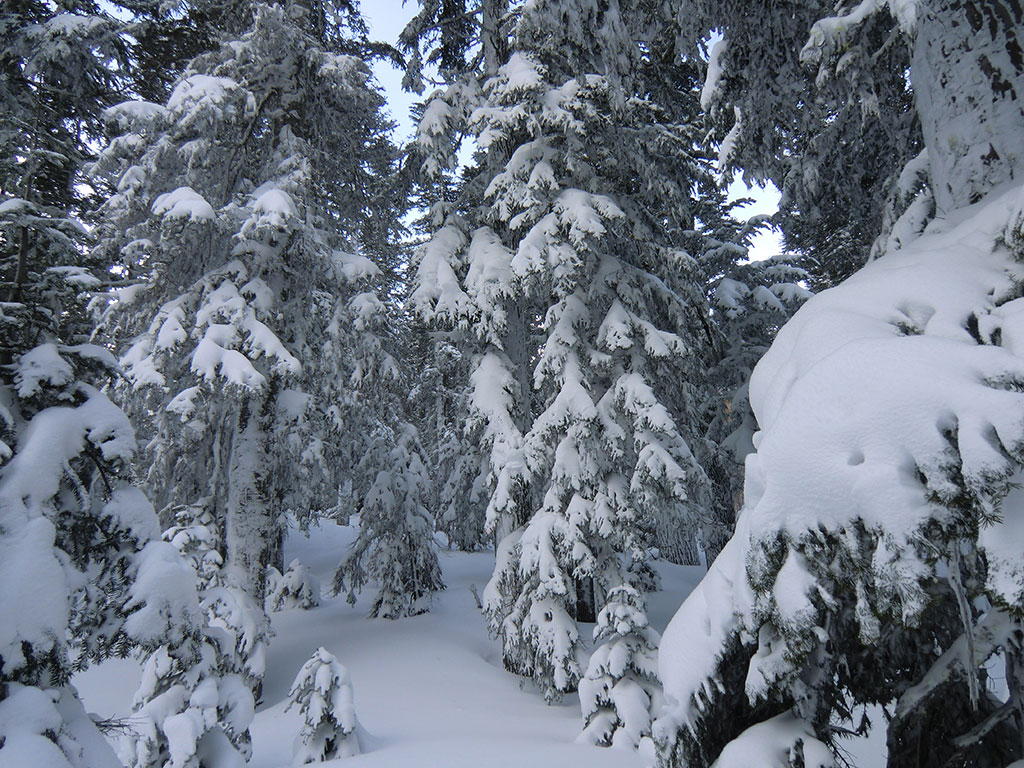 Fresh Snow Masking Trail to Cooper Spur Shelter