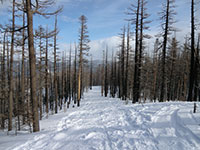 Packed Down Tilly Jane Trail on Our Return Snowshoe