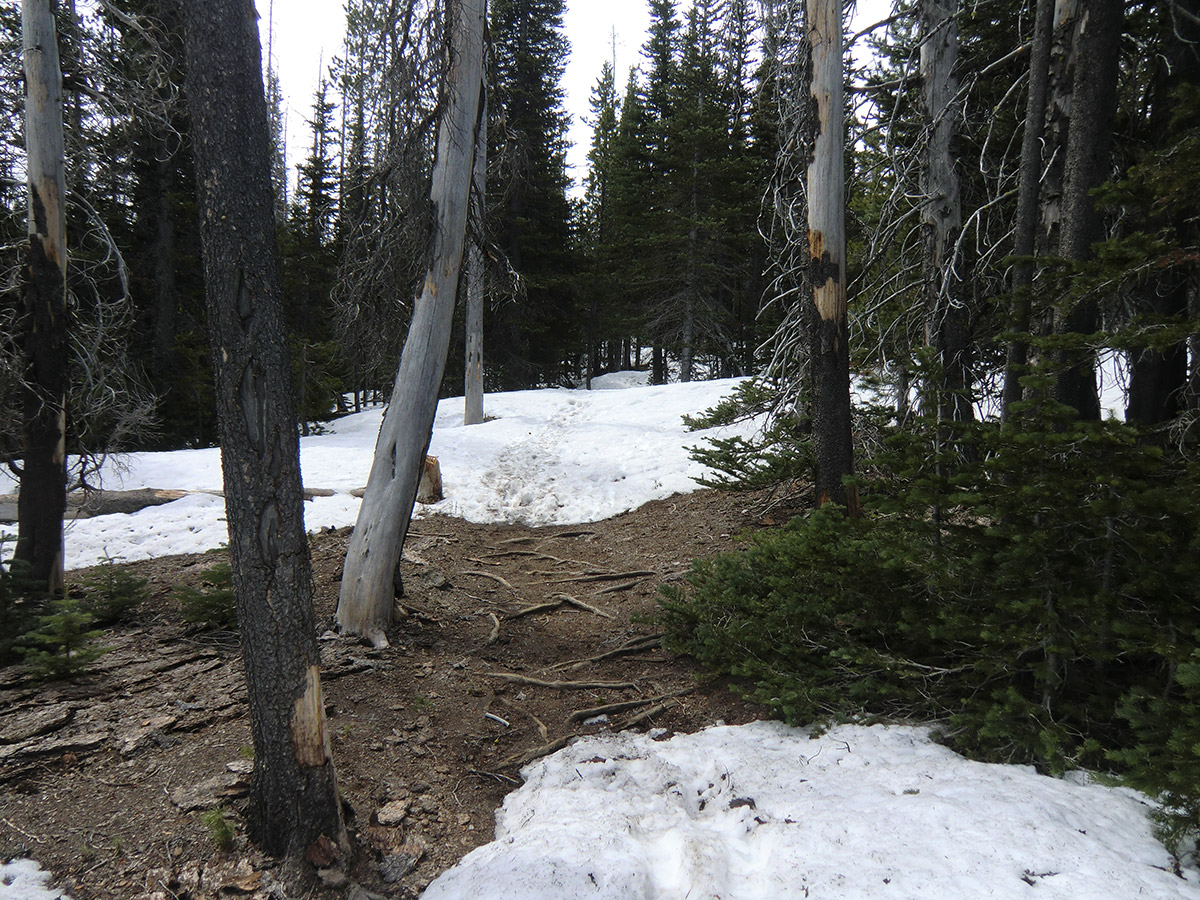 Patches of Snow on Pole Creek Trail # 4072