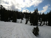 Snowmobile Tracks Near Mt Adams Wilderness Boundry