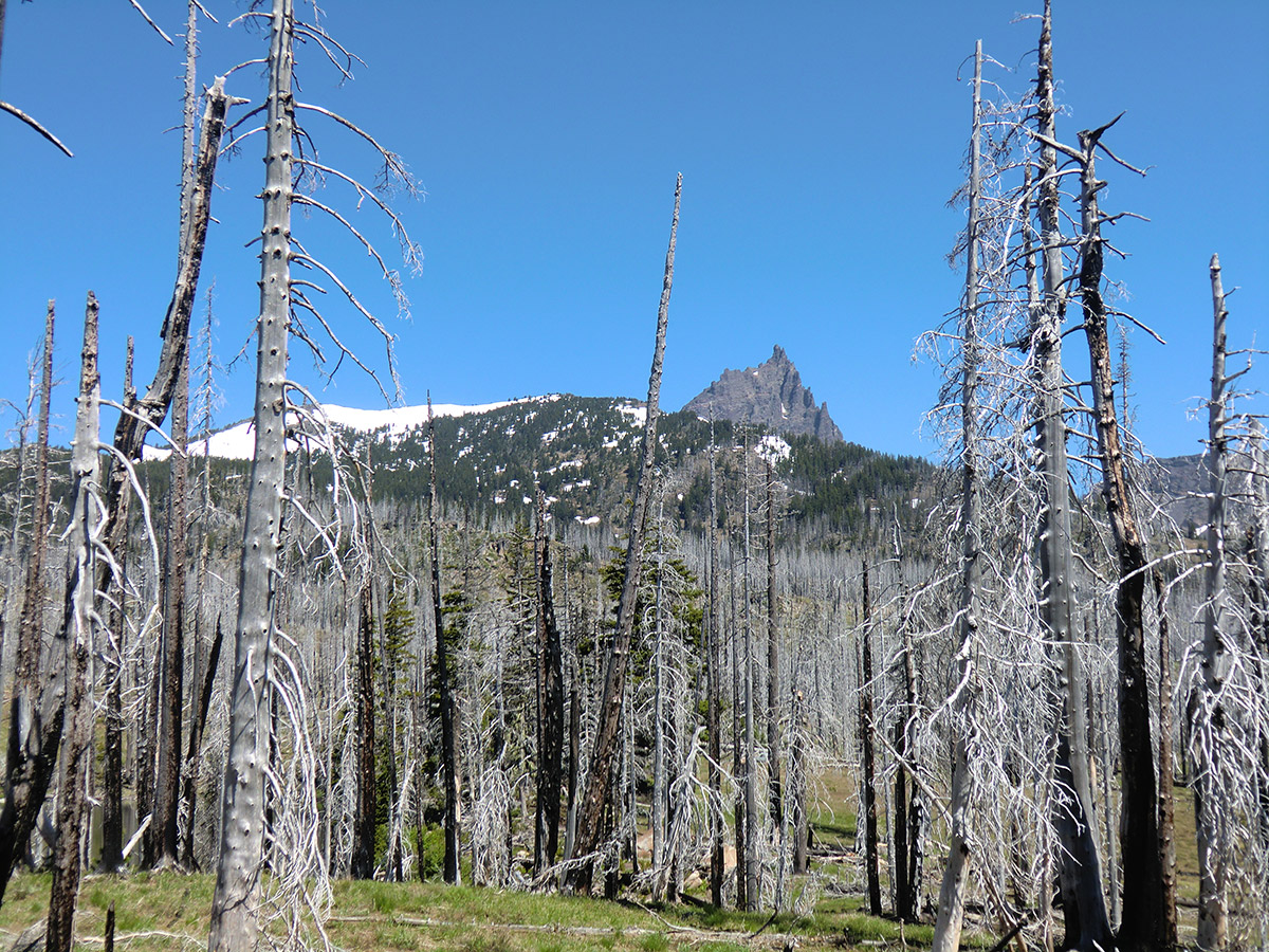 Three Fingered Jack from Near Booth Lake