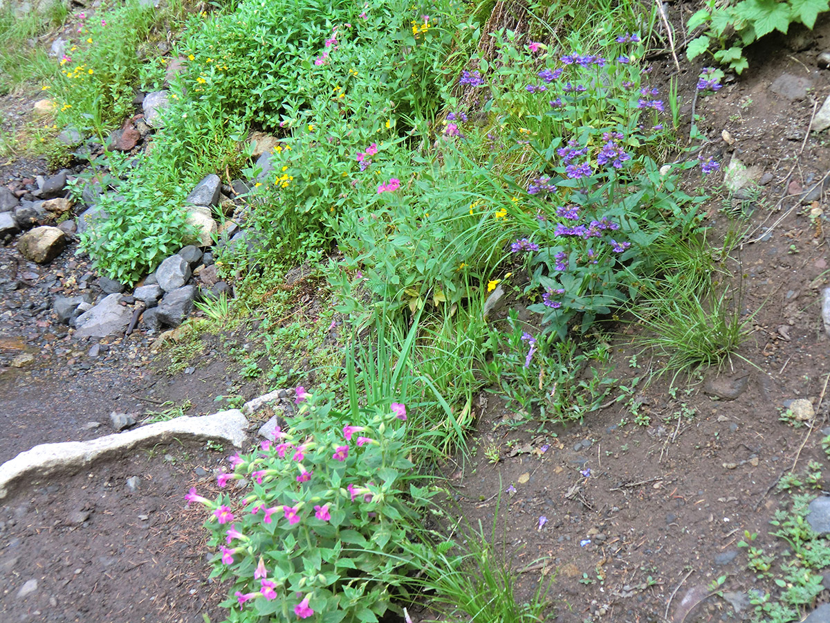 Wildflowers Along Trail