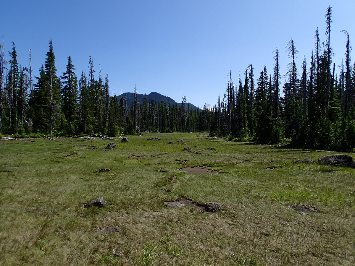Meadow with Mt Jefferson in the Distance