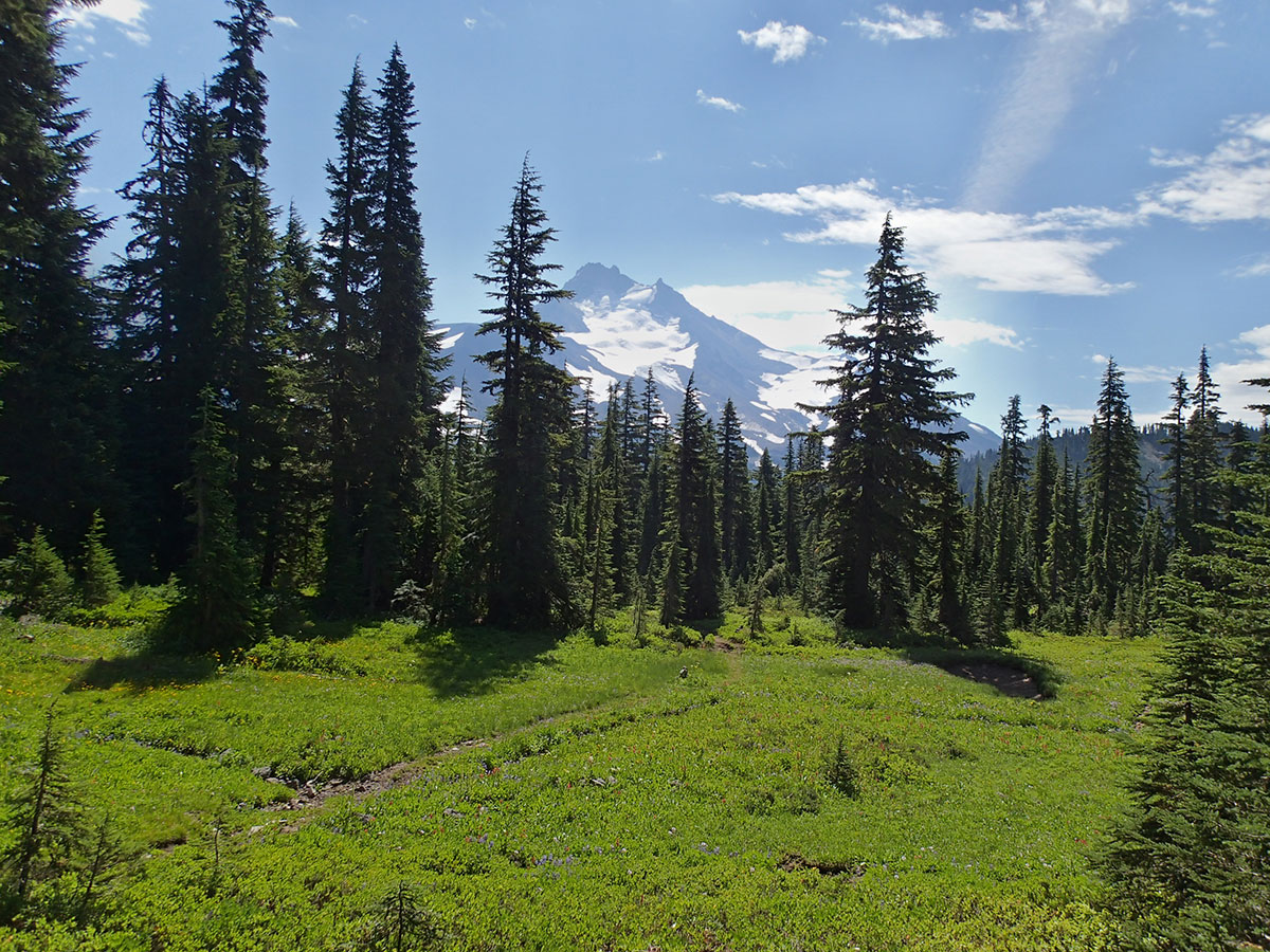 Subalpine Meadow with Mt Jefferson in the Background