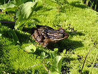 Frog Enjoying the Sun
