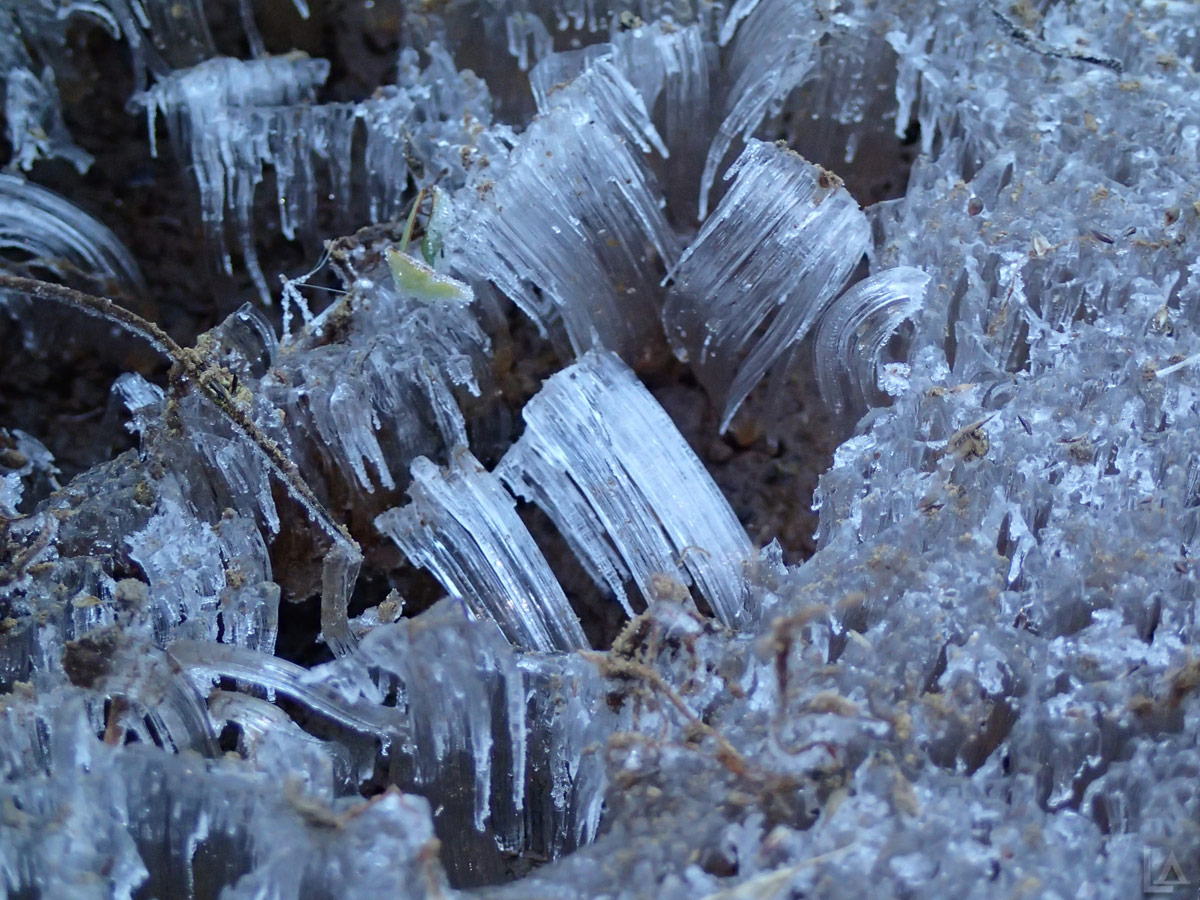 Closeup of Ice Formation on a Cold Morning