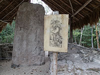 Stele with Drawings and Glyphs at Cobá Ruins