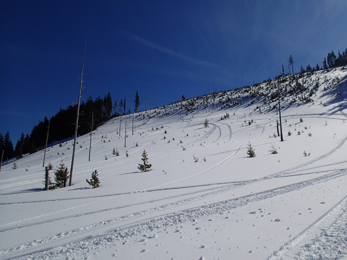 Lots of Fresh Snowmobile Tracks on a Play Hill