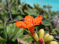 Flower Above the Caribbean Sea