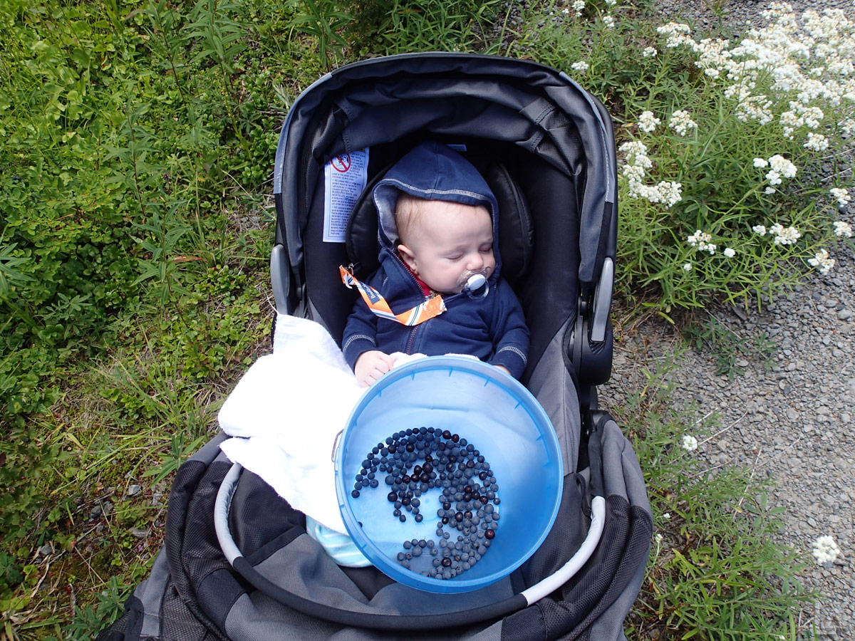 Julian Asleep While Katie and I Pick Huckleberries