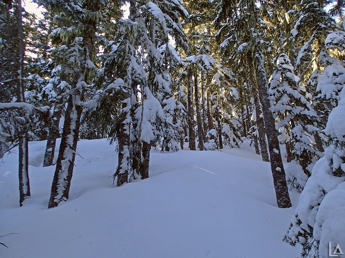 Even more fresh snow higher up on Olallie Butte