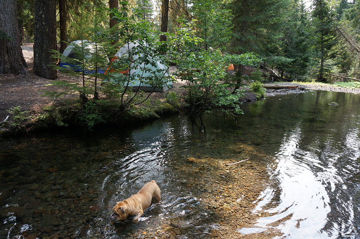 Fiona cooling off in Barlow Creek