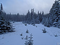 Fresh snow on trail to Lookout Mountain