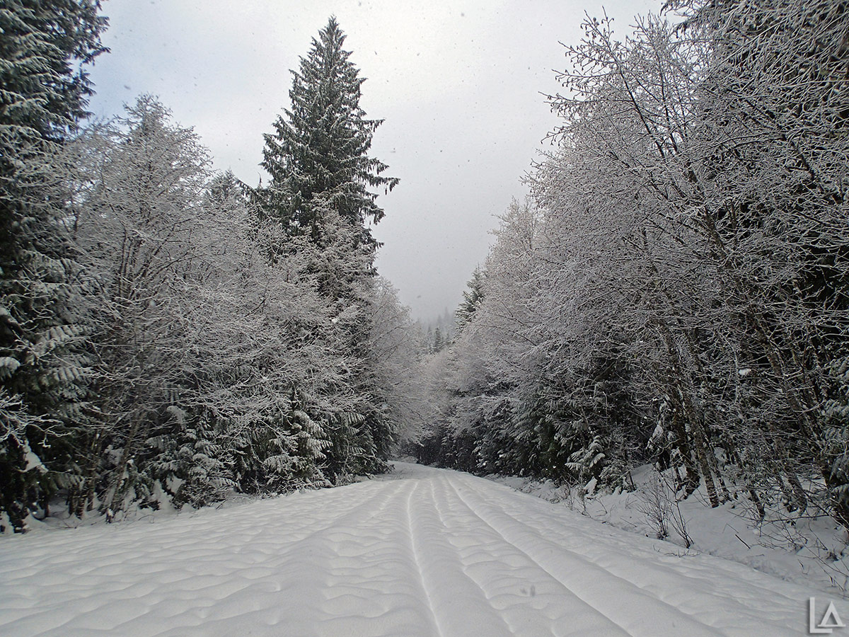 Snow near Shellrock Creek