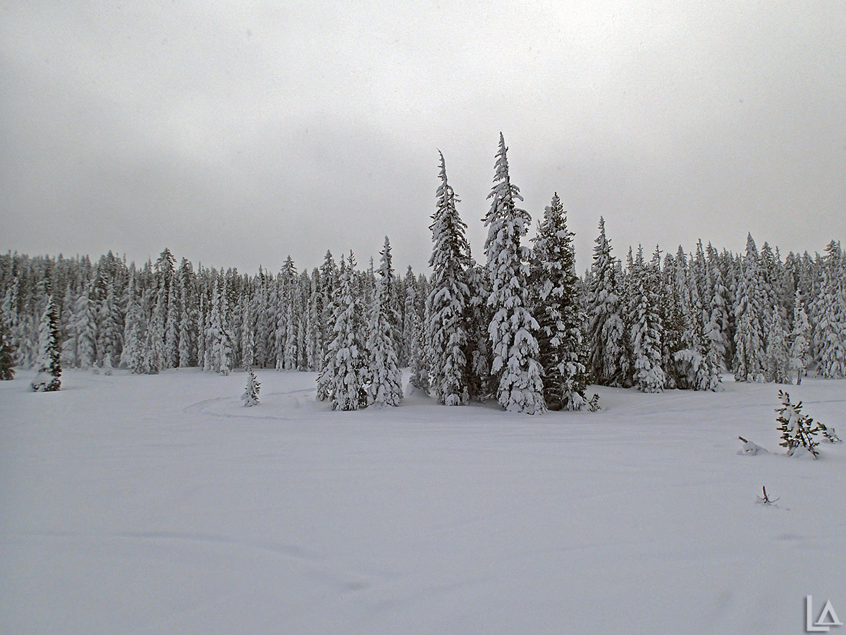 Bonney Meadows covered in snow