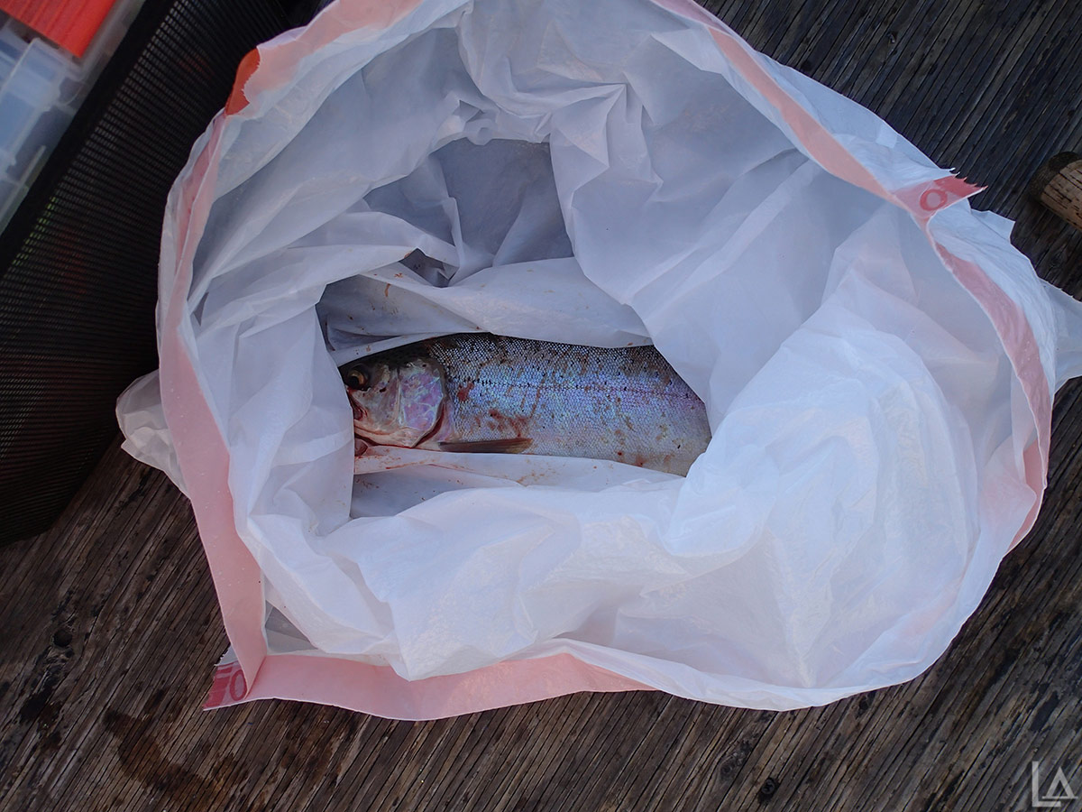 Diamond Lake rainbow trout in-a-bag