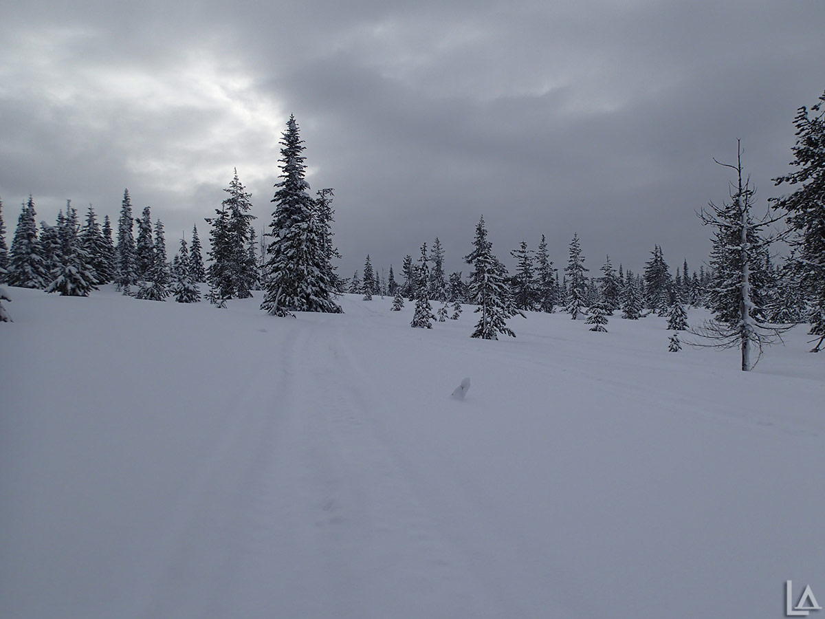 Snowmobiling near the berry fields West of Mt Adams