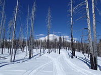 Snowmobiling through the trees on Mt Adams